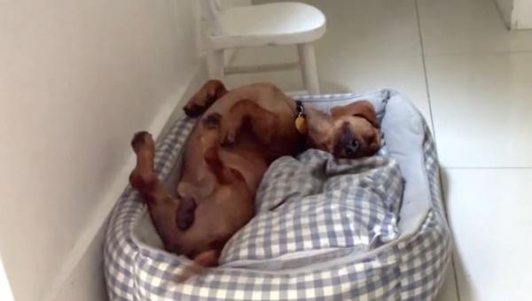 Ten pies został adoptowany i ma teraz dom. Nie uwierzysz w jaki sposób...