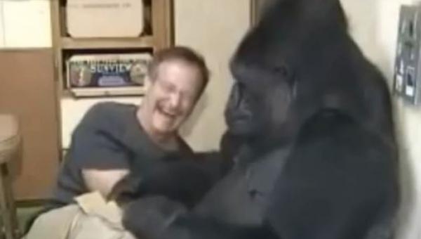 Robin Williams spotkał goryla mówiącego w języku migowym. Niesamowite jak...