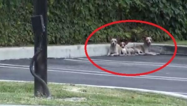 Zobaczyli na ulicy trzy bezpańskie psy, ale to co stało się potem łapie za serce