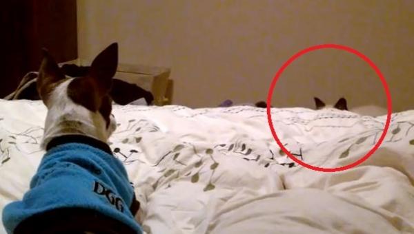 Kot postanowił zaatakować psa. Nie spodziewał się co zrobi pies