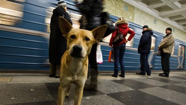 Na stacji metra ten pies zrobił coś czego byś się w życiu nie spodziewał!