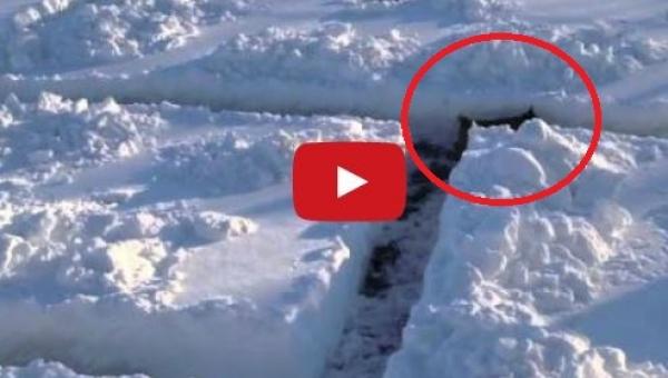 Wybudowali labirynt śnieżny dla swojego psa, gdy wbiegł do środka pękli ze...