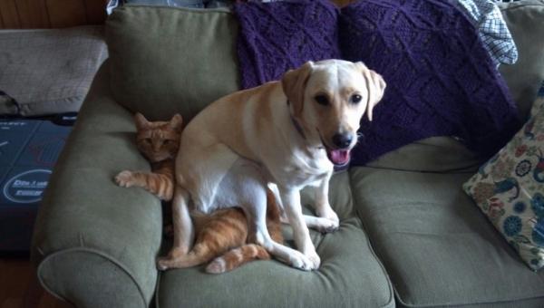 Dla wszystkich miłośników zwierząt: Koniecznie zobaczcie te zdjęcia!