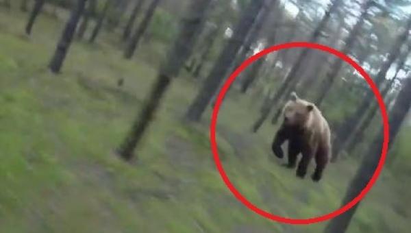 Rowerzysta zobaczył że goni go niedźwiedź, zobacz co stało się potem