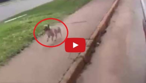 Ratownicy zabrali mężczyznę do karetki, wtedy jego pies zrobił coś czego się...