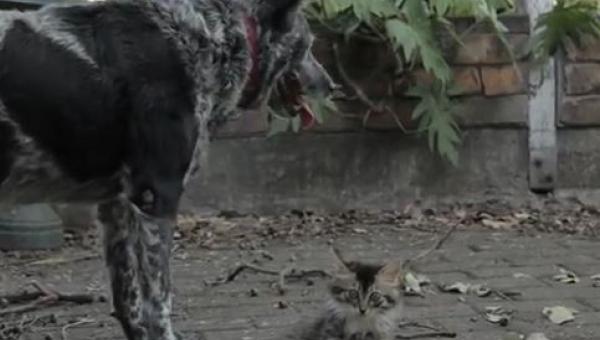 Ta kotka jest niepełnosprawna, zobacz jak się nią opiekuje ten piesek