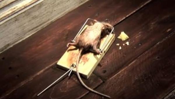 To co zrobiła ta mysz jest... niemożliwe!
