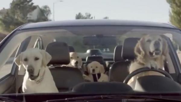 Tak mogły by wyglądać nasze drogi gdyby psy mogły prowadzić