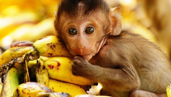 Jedna z małp w klatce została pobita przez pozostałe małpy. Gdy zrozumiesz...