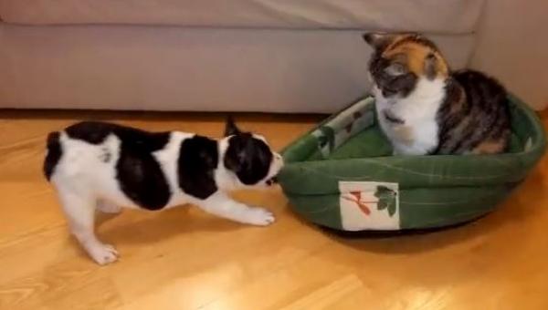 Szczeniak chciał się położyć, jednak kot zajął jego miejsce, to co stało się...