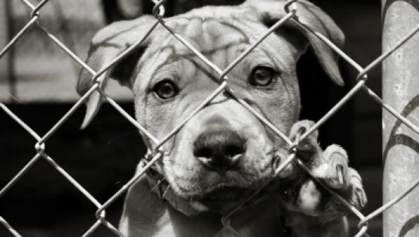 Kobieta myślała, że ratuje psa, jednak sposób w jaki widział to pies jest...
