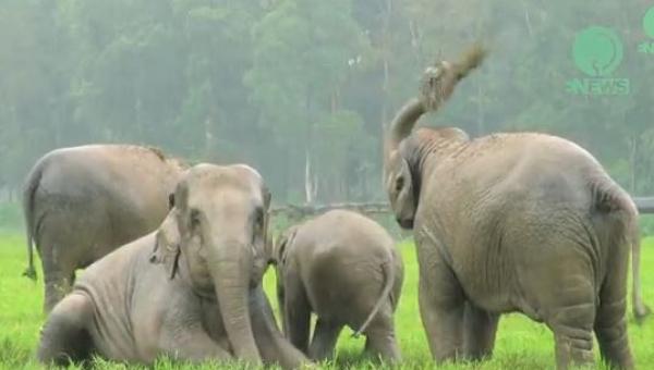 Zaczął padać deszcz wtedy te słonie zrobiły coś niesamowitego