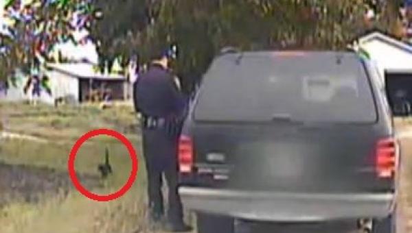 Ten kot zrobił coś naprawdę genialnego z tym policjantem. Umieram ze śmiechu