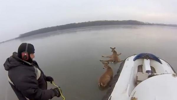 Zobaczył jelenie które utknęły na środku jeziora, to co zrobił? Genialne!