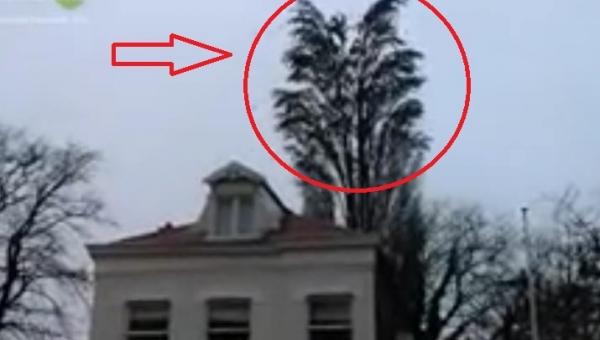 Uważnie obserwuj drzewo. Za chwilę stanie się coś niesamowitego!