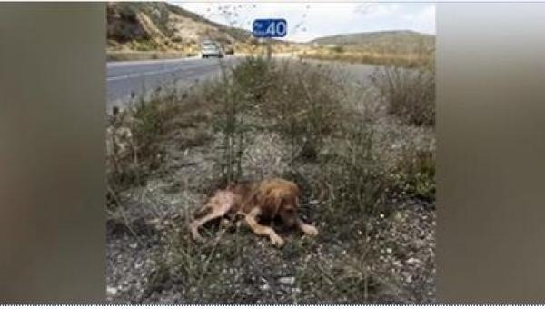 Umierające przy drodze szczenię było przez kilka dni ignorowane przez...