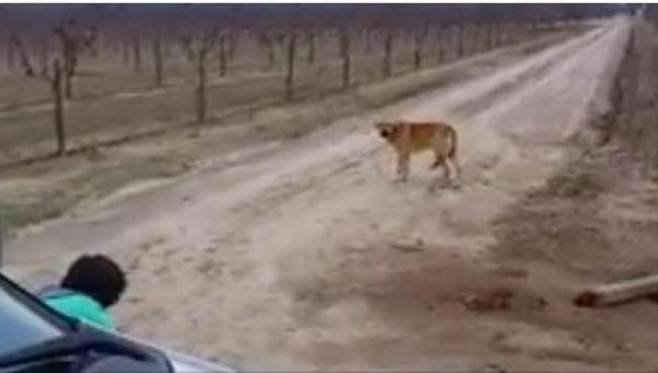Ten pies chciał się dobrowolnie zagłodzić. Powód wzrusza do łez, bardzo...