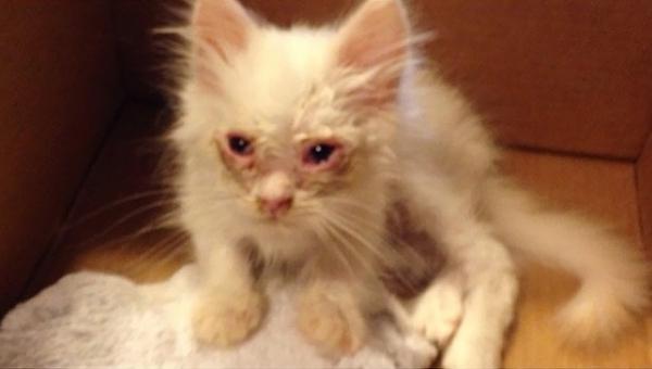Rodzina uratowała konającego kota, nikt nie spodziewał się jak będzie wyglądał