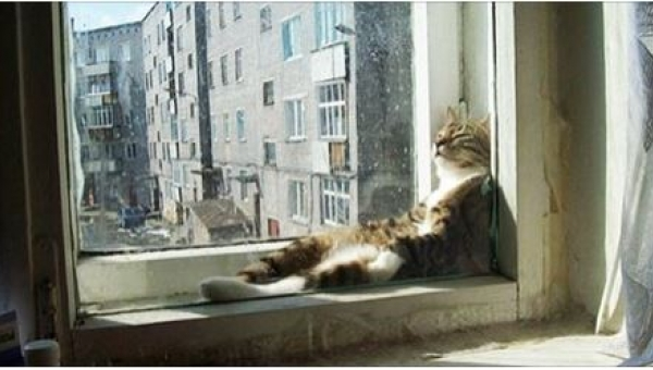 19 kotów, które są mistrzami w wynajdywaniu najcieplejszych miejsc do spania!...