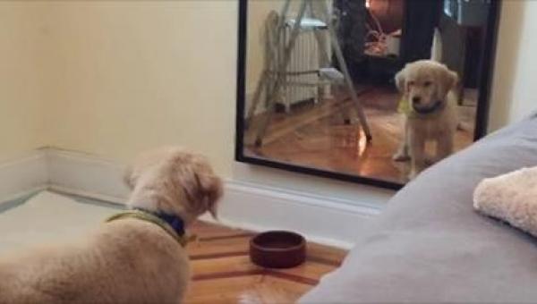 Z ciekawością spojrzał w lustro, a potem zrobił TO!