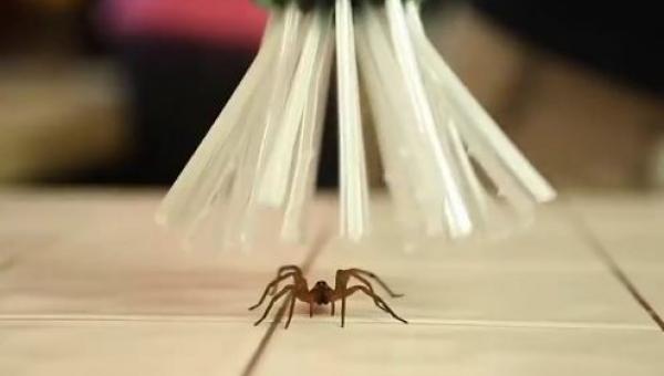 Oto wynalazek dla wszystkich którzy boją się pająków! W dodatku nie zabija!