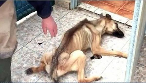 To, co zrobili temu psu, jest karygodne! Na szczęście udało się go uratować w...