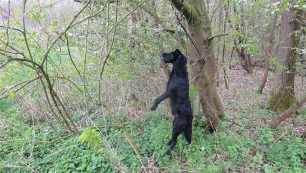 Mężczyzna wybrał się na spacer do lasu w Niemczech. Nagle zobaczył psa...