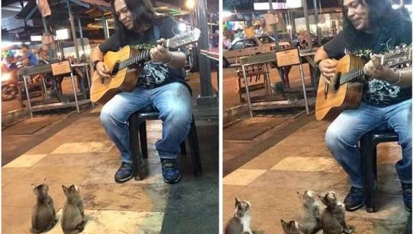 Ignorowany muzyk zagrał dla... czterech kotków. Ich reakcja? Bezcenna!