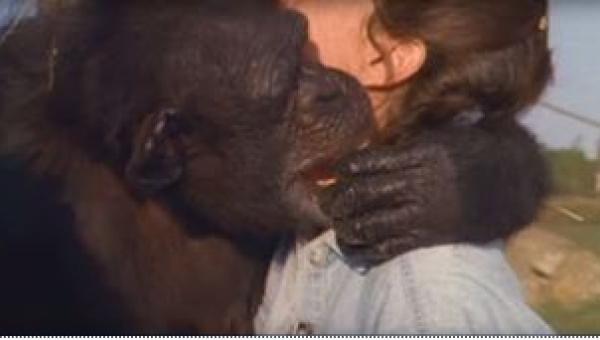 Ta małpa nigdy nie zapomniała tego, co zrobiła dla niej pewna kobieta......
