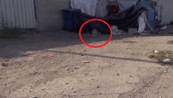 Tego psa potrącił samochód. To, co go spotkało później, jest niewiarygodne!