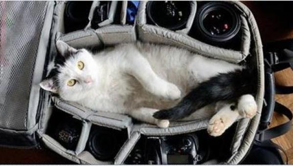 Tych 12 zwierząt nie chce, by ich właściciele podróżowali bez nich... Zdjęcie...