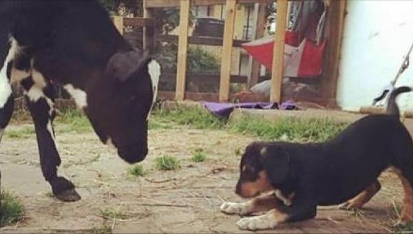 Gdy przygarnęła pod swój dach porzuconego psa, nie sądziła, że TAK to się...