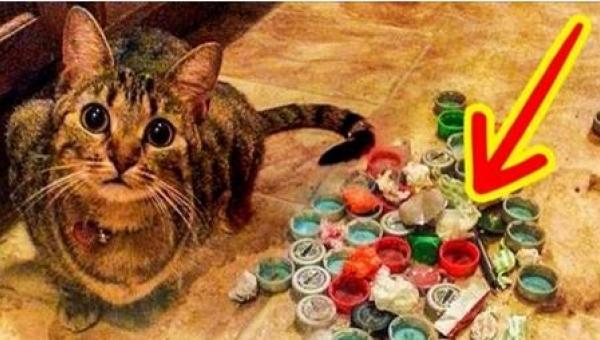 Te 12 kotów robi furorę w internecie! Musicie to zobaczyć. Numer 10 rozbawił...