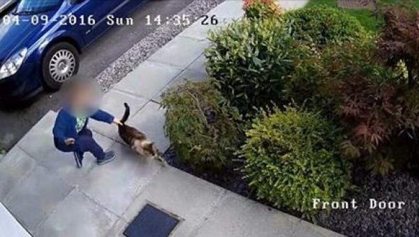 Kamera nagrała, jak syn sąsiadów pastwi się nad ich kotem - na szczęście...