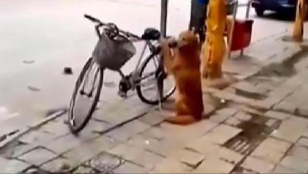 Pies pilnuje roweru właściciela. Poczekaj aż zobaczysz co dzieje się w 45...