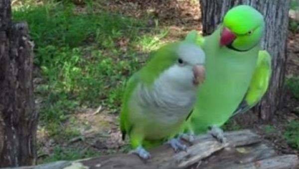 To co robi ta papuga jest niewiarygodne!
