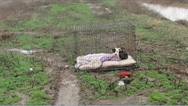 Zamknięty i przemarznięty pies czekał w deszczu na powrót właścicieli. Kiedy...
