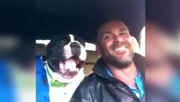 Ten pies przyćmił talent swojego właściciela własnym wykonaniem popularnej...