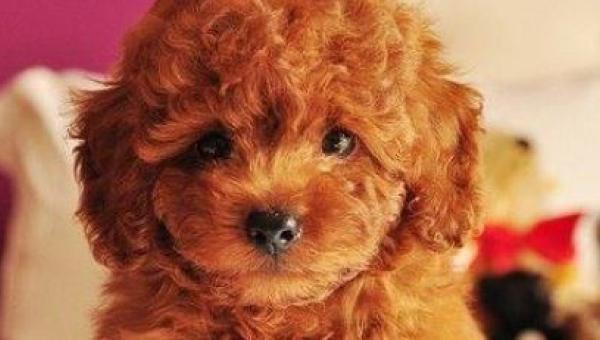 Uwaga! Obejrzenie tych zdjęć grozi nagłą potrzebą adopcji psa!