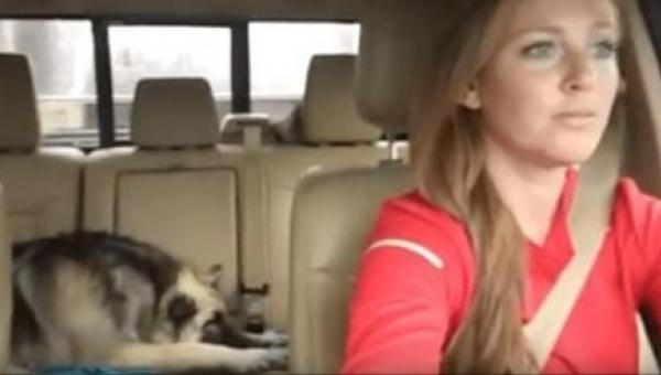 Pies śpi na tylnym siedzeniu samochodu gdy w radio zaczyna lecieć jego...