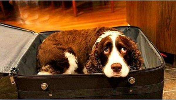 Powód, dla którego zamknął swojego psa w walizce, porusza do łez!