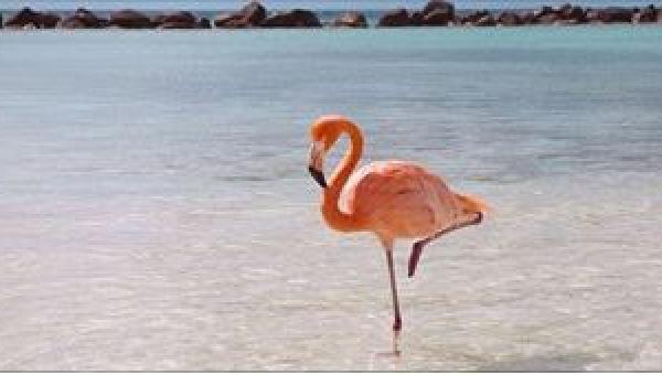 Trzech chłopców zbliżyło się do flamingów. To, co zrobili ptakom, nie mieści...