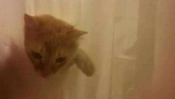 Kiedy ten kot czegoś chce to będzie szedł po trupach, żeby to osiągnąć......