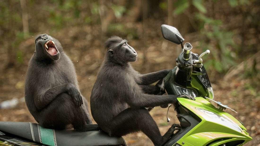 10. Oto ile radości może dać krótka przejażdżka! ;)