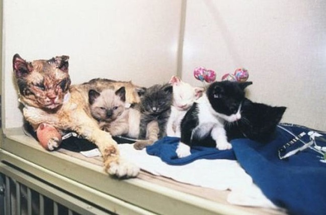 Oto kocia mama razem z pięcioma kociętami, które uratowała z płonącego budynku