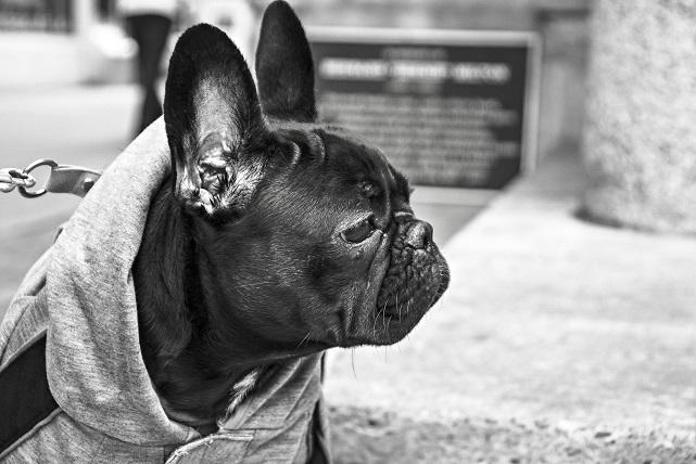 1. Masaż uszu koi stres i niepokój. Zawsze zwracaj uwagę na psie uszy. Ta...