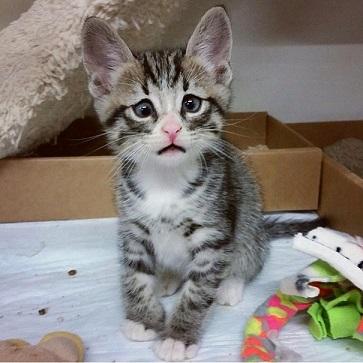 Gdy miał zaledwie 4 tygodnie, Bum znalazł się w schronisku dla zwierząt. Był...