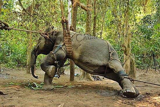 Zwierzęta trzymane są w zbyt małych klatkach, a ich nogi są związane. Zwykle...