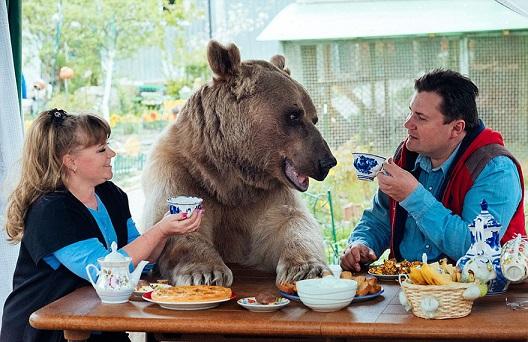 Stepan, jak się nazywa niedźwiedź, został sierotą mając zaledwie trzy...