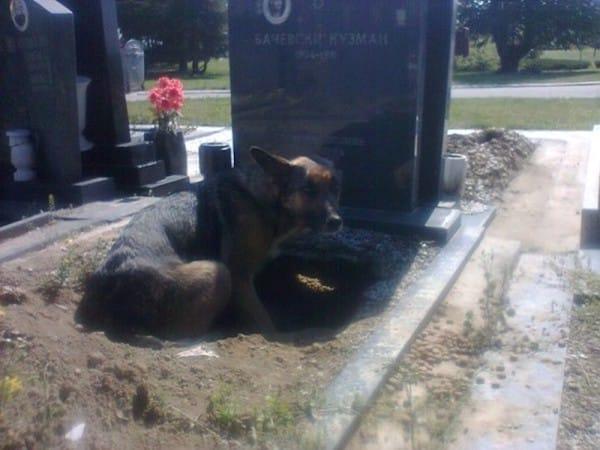 Mowa o tym zdjęciu. Widzimy psa o smutnym spojrzeniu, który położył po sobie...